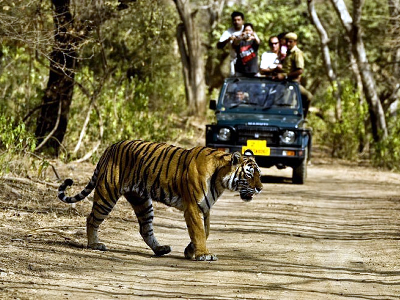 Image result for Flawless Tour Packages For Family Vacation at Jim Corbett National Park